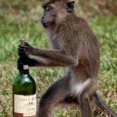 DrunkenMonkey